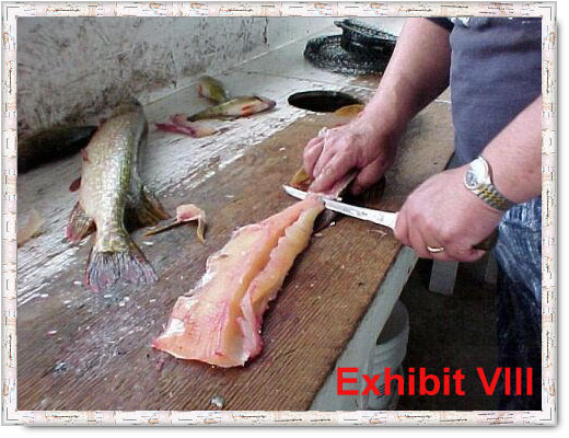 fillet pike remove y-bones from northern pike